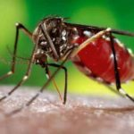 Another person died from dengue fever.